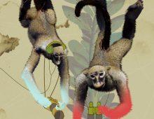 monkey spies : 2004